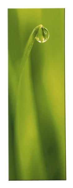 Magic Green Tautropfen Bild - Kasper
