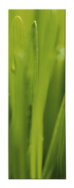 Magic Green Blätter Bild - Kasper